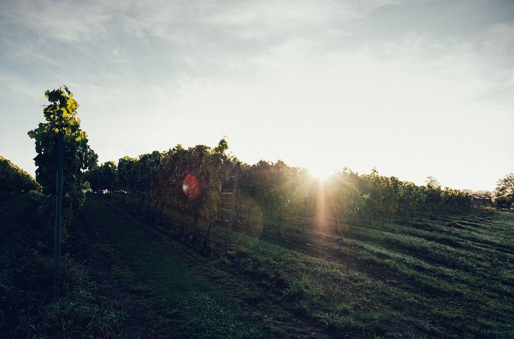 domaine-viticole-scandinavie-astad-vingard